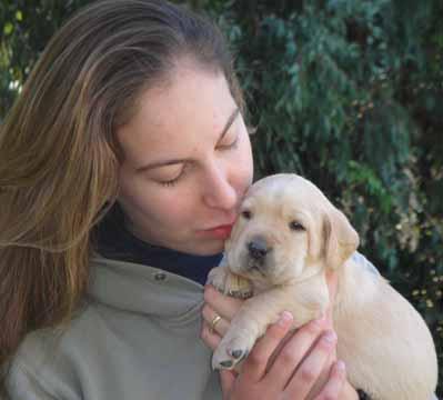 Labrador retriever for sale tucson az