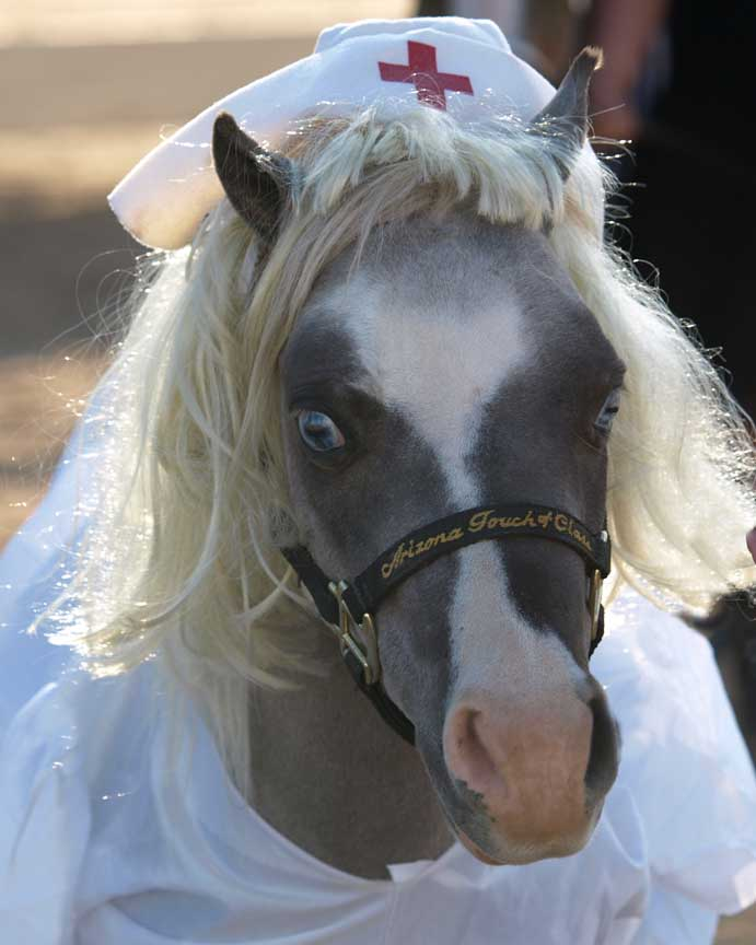 DIY Mickey and Minnie Mouse horse costume for Halloween ...   Mini Horse Costume